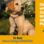 Rankings of Beloit Pet Contest