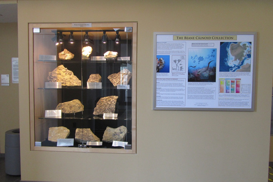 One of the several Beane Crinoid Collection display cases in the Sanger Center for the Sciences.