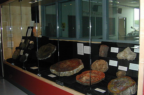 The Solem Fossilized Wood Collection is on display on the fourth floor of the Sanger Center for the Sciences.