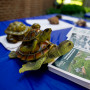In addition to Beloit staff, turtles are ready to greet alumni upon their return.